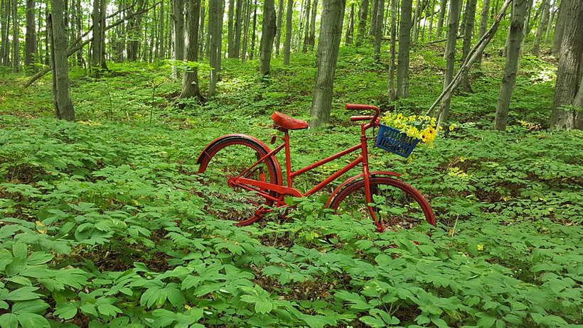 Immerse Yourself in Nature at Singhampton Sculpture Forest